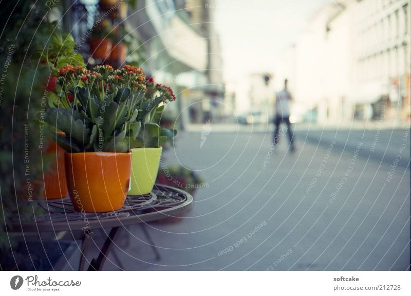 spot of green Beautiful White Flower Green City Plant Red Summer Calm Yellow Street Colour Gray Environment Europe Simple