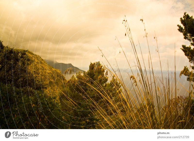 golden eye Environment Nature Landscape Plant Clouds Summer Grass Bushes Coast Ocean Beautiful Majorca Blade of grass Colour photo Exterior shot Copy Space top