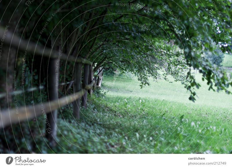 stroll Nature Landscape Tree Bushes Park Meadow Green Fence Pasture Shadow Leaf canopy Loneliness Dreary Hope Contentment Inner strength Serene Colour photo