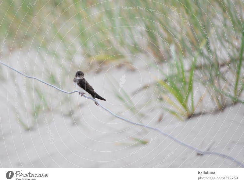 Nature Ocean Plant Summer Beach Vacation & Travel Animal Freedom Sand Bird Coast Weather Sit Wild animal Dune Baltic Sea