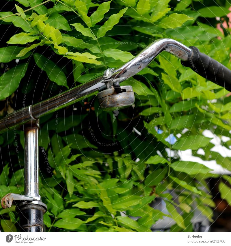 bike Leisure and hobbies Bicycle Summer Glittering Green Multicoloured Exterior shot Day Front view Bicycle handlebars Bicycle bell Detail Section of image