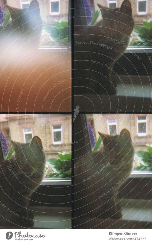 Animal Emotions Window Cat Soft Animal face Listening Discover Watchfulness Pet Domestic cat Attentive Window board Window seat Cat's ears