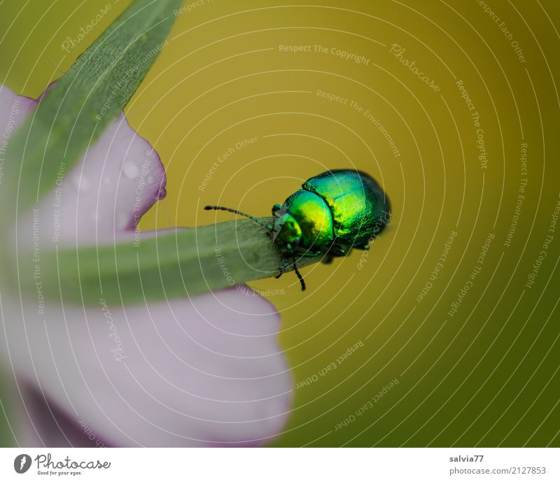 Nature Plant Summer Beautiful Green Flower Animal Leaf Blossom Garden Pink Glittering Esthetic Uniqueness Insect Ease
