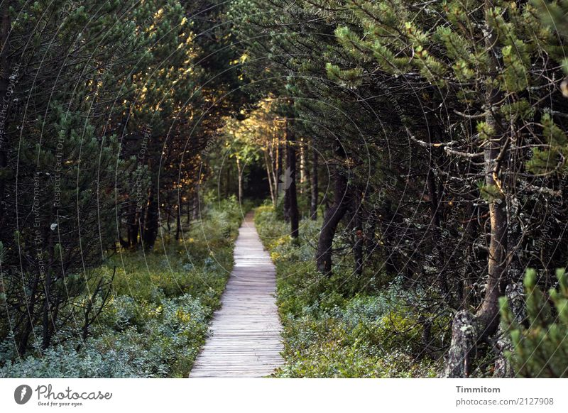 That way! Environment Nature Plant Spring Forest Lanes & trails Wood Hiking Dark Natural Brown Green Woodway Bog Sunlight Shadow blind lake Colour photo