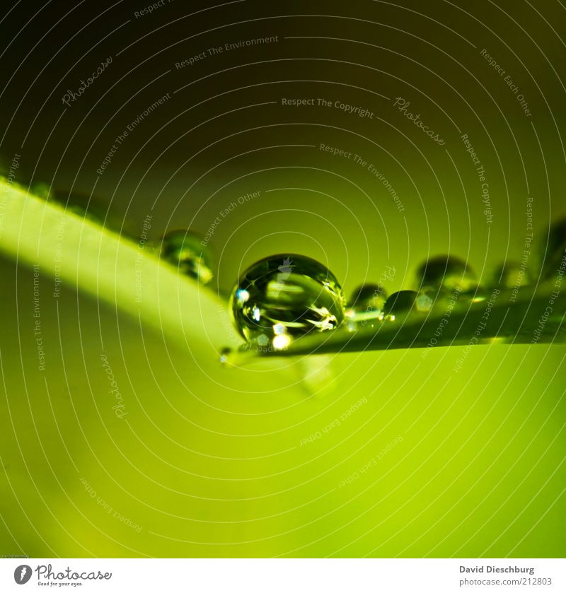 fresh & wet Nature Plant Drops of water Spring Summer Rain Leaf Foliage plant Green Wet Damp Round Sphere Reflection Colour photo Exterior shot Close-up Detail