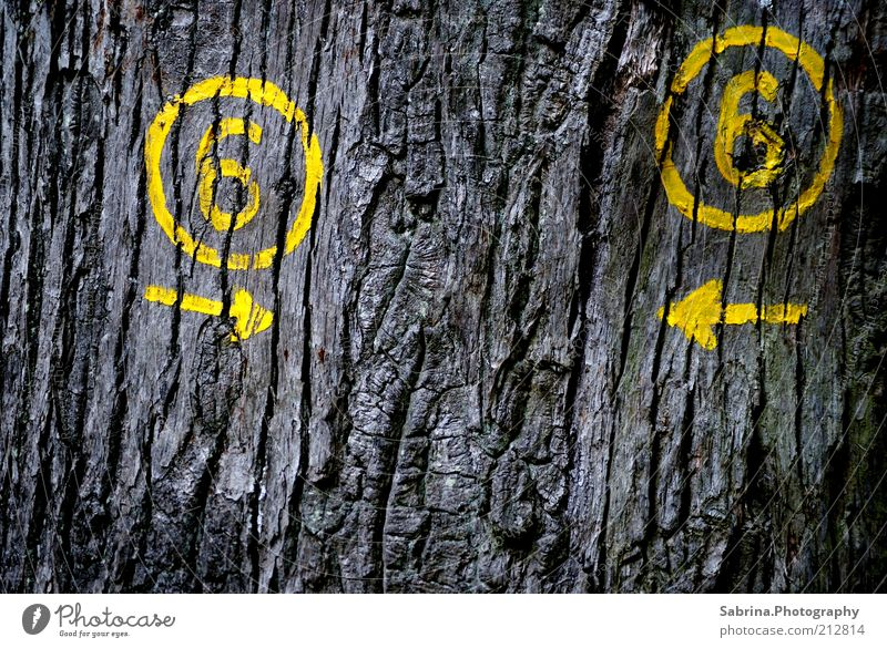 Erroneous Route 6 Trip Freedom Summer Environment Nature Beautiful weather Plant Tree Deserted Wood Graffiti Observe Relaxation Dry Crazy Wild Yellow Gray Loyal