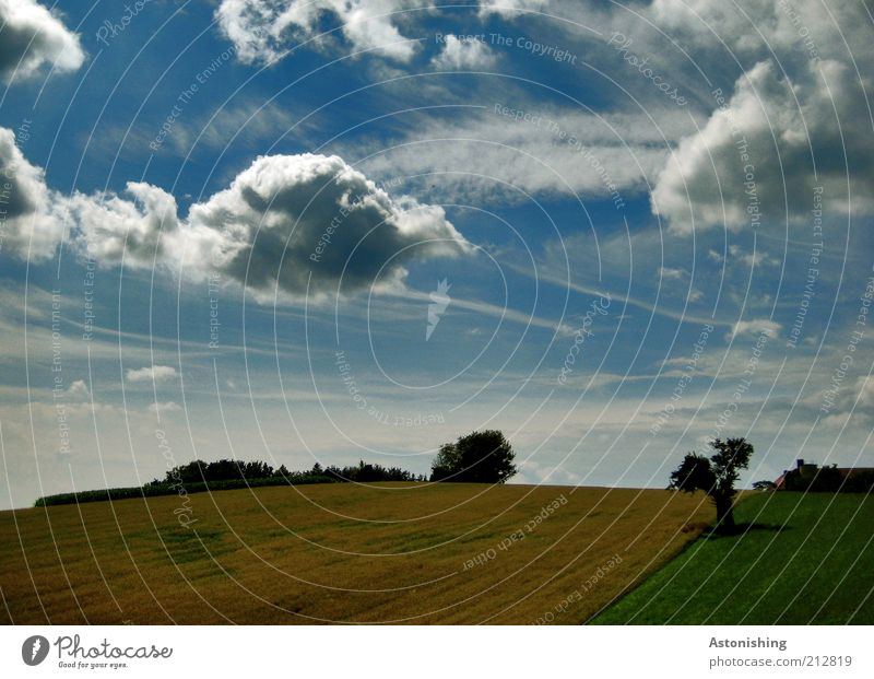 Sky Nature Blue White Green Beautiful Tree Plant Clouds Black Far-off places Environment Landscape Yellow Meadow Grass