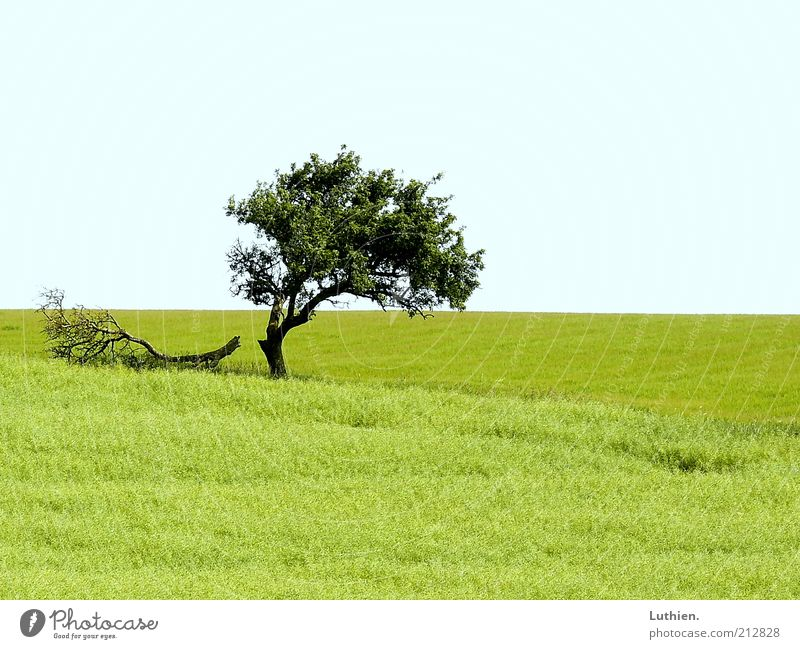 Nature Tree Green Blue Summer Far-off places Meadow Grass Landscape Environment Horizon Earth Pasture Light