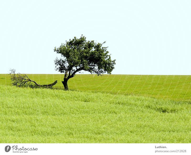 Nature Tree Green Blue Summer Far-off places Meadow Grass Landscape Environment Horizon Earth Pasture Light