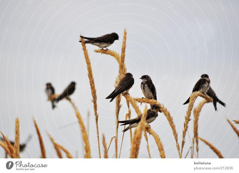 Sky Plant Beach Vacation & Travel Ocean Animal Freedom Spring Coast Weather Bird Sit Group of animals Wild animal Wing Beautiful weather