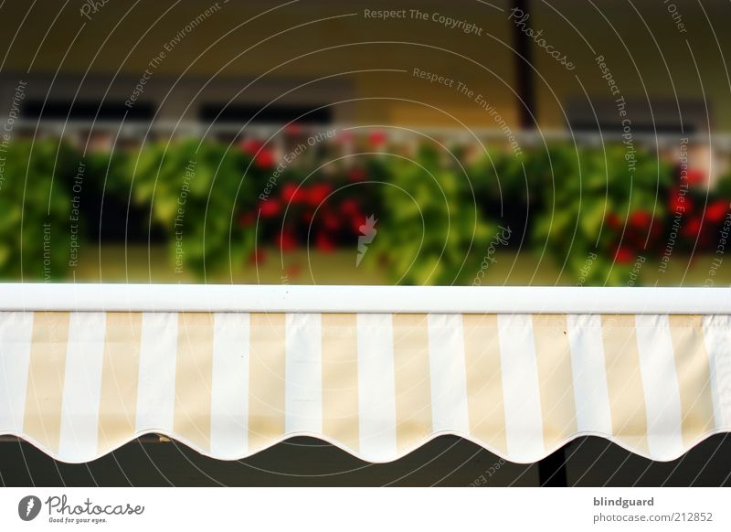 White Green Red Summer Yellow Stripe Striped Section of image Weather protection Undulating Sun blind Undulation Wavy line