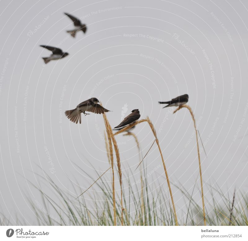 Move over a bit! Freedom Summer Nature Sky Cloudless sky Spring Weather Beautiful weather Plant Wild plant Coast Animal Wild animal Bird Wing Group of animals