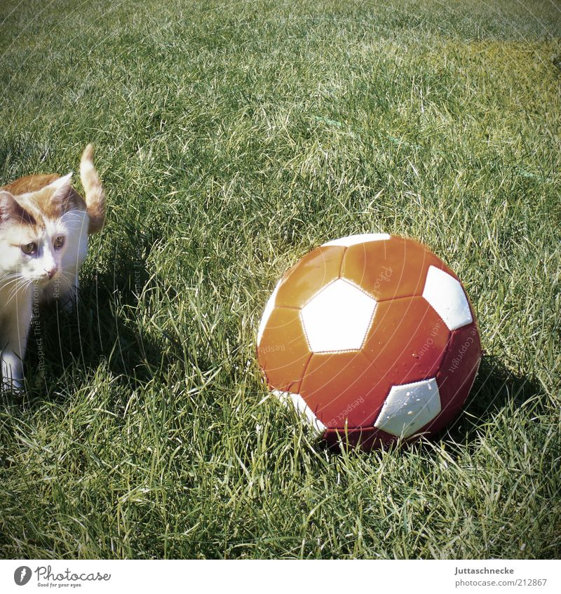 Cat Green Red Animal Playing Funny Baby animal Exceptional Foot ball Ball Pet Romp Ball sports