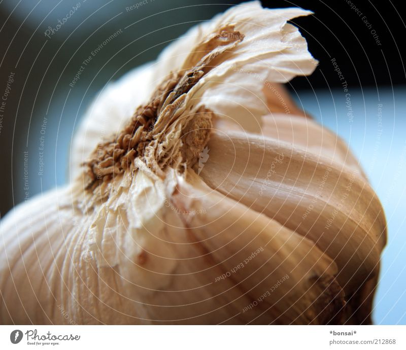 knoofi Food Herbs and spices Garlic Clove of garlic Garlic bulb Fragrance To dry up Fresh Healthy Delicious Round Blue White Appetite Cooking Ingredients Smelly