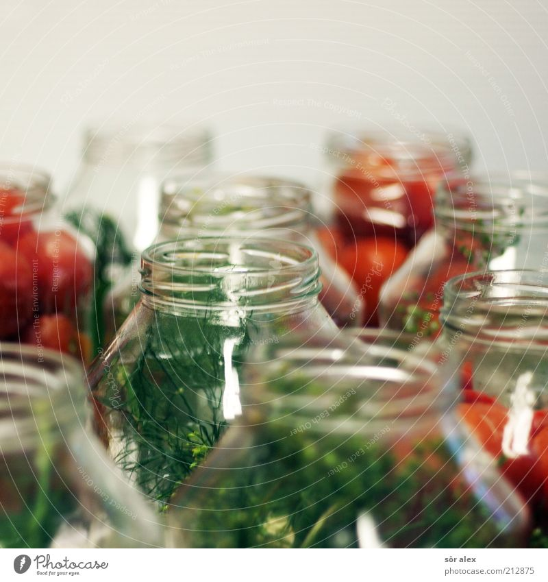 pickle tomatoes Food Vegetable Tomato Dill Herbs and spices Preserving jar tomato jar Glass Delicious Green Red Delicacy Conserve Stability Canned Self-made