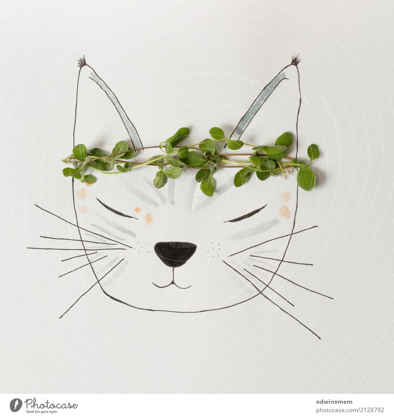 meow Leisure and hobbies Handicraft Draw Nature Plant Summer Herbs and spices Accessory Animal Pet Cat Paper Decoration Sleep Dream Bright Natural Wild Gray