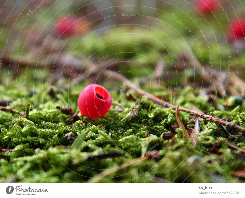 Nature Green Plant Red Moss Berries Individual Woodground Fruity Macro (Extreme close-up) Bright Colours