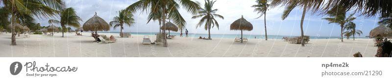 Beach Sand Graffiti Palm tree Deckchair
