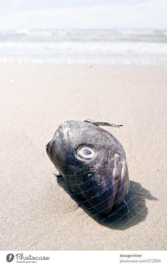 Ocean Summer Beach Vacation & Travel Eyes Far-off places Death Head Coast Fish Animal face Lie Odor Disgust North Sea