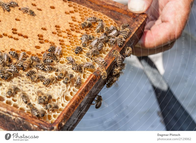 At work Animal Farm animal Wild animal Bee Group of animals Flock Build Movement Rotate Fragrance Eating Fluid Glittering Curiosity Thorny Strong Sweet Yellow