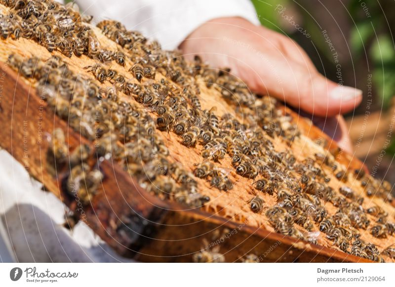 With the beekeeper Food Dessert Ice cream Candy Jam Nutrition Eating Breakfast To have a coffee Picnic Organic produce Vegetarian diet Diet Fasting Healthy