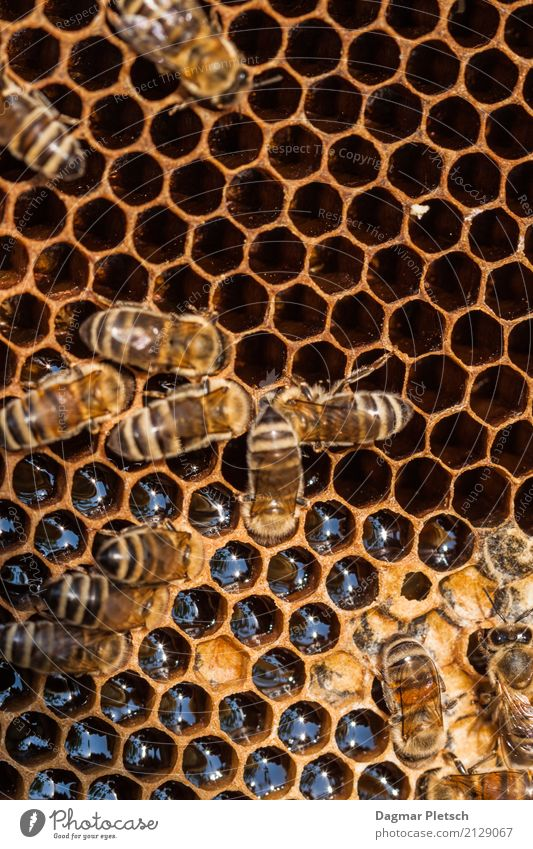 honeycomb Dessert Candy Honey Nutrition Buffet Brunch Picnic Organic produce Vegetarian diet Diet Fasting Life Meditation Nature Animal Drops of water Sunlight