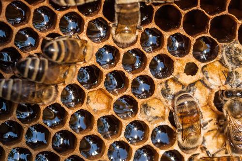 honeycomb Dessert Candy Jam Buffet Brunch Organic produce Vegetarian diet Honey Farm animal Wild animal Bee Group of animals Flock Work and employment Crawl