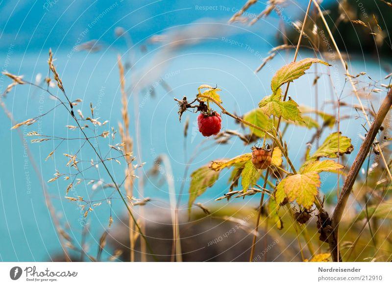 Nature Water Blue Plant Summer Leaf Colour Life Grass Landscape Food Environment Fruit Esthetic Bushes Authentic
