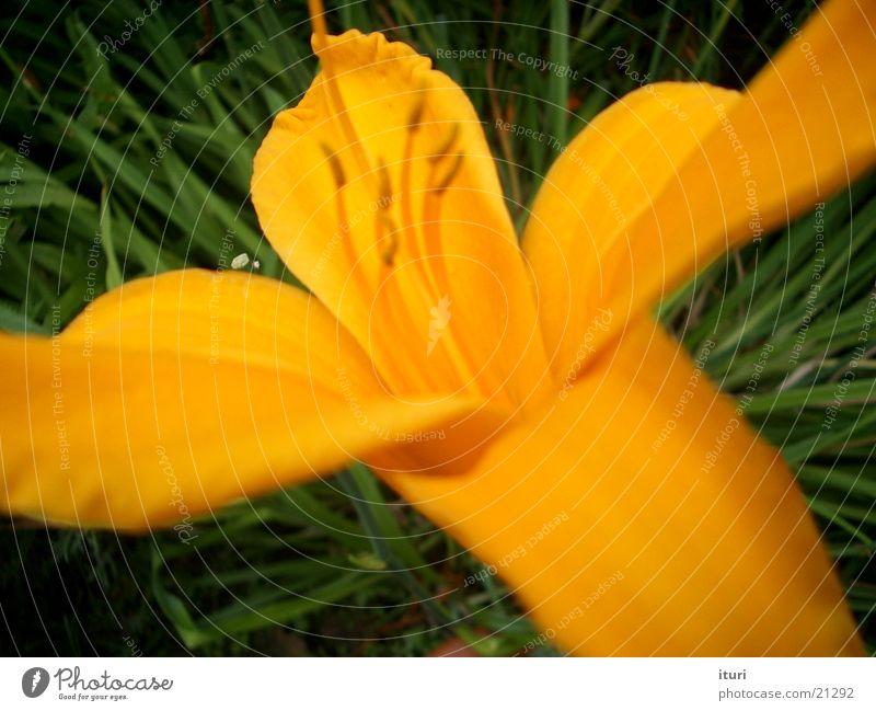 Beautiful Flower Summer Yellow Blossom Spring