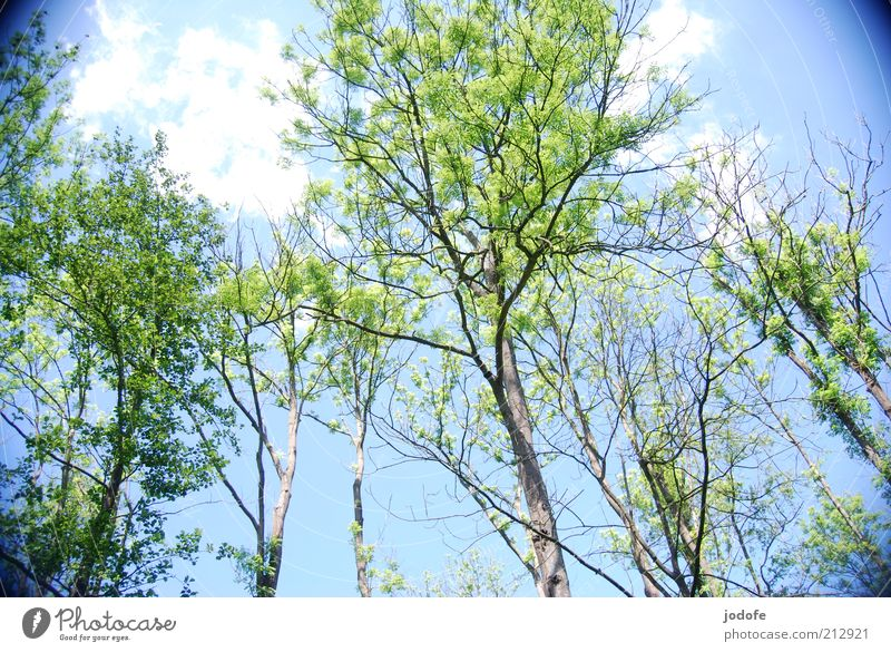 Sky Nature Blue Green Tree Plant Summer Forest Environment Death Spring Beautiful weather Decline Tree trunk Treetop Upward