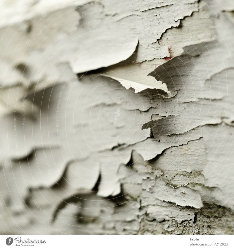 Old White Wood Gray Dye Dirty Background picture Derelict Decline Varnish Flake off Weathered Paintwork Tumbledown Layer of paint Ravages of time