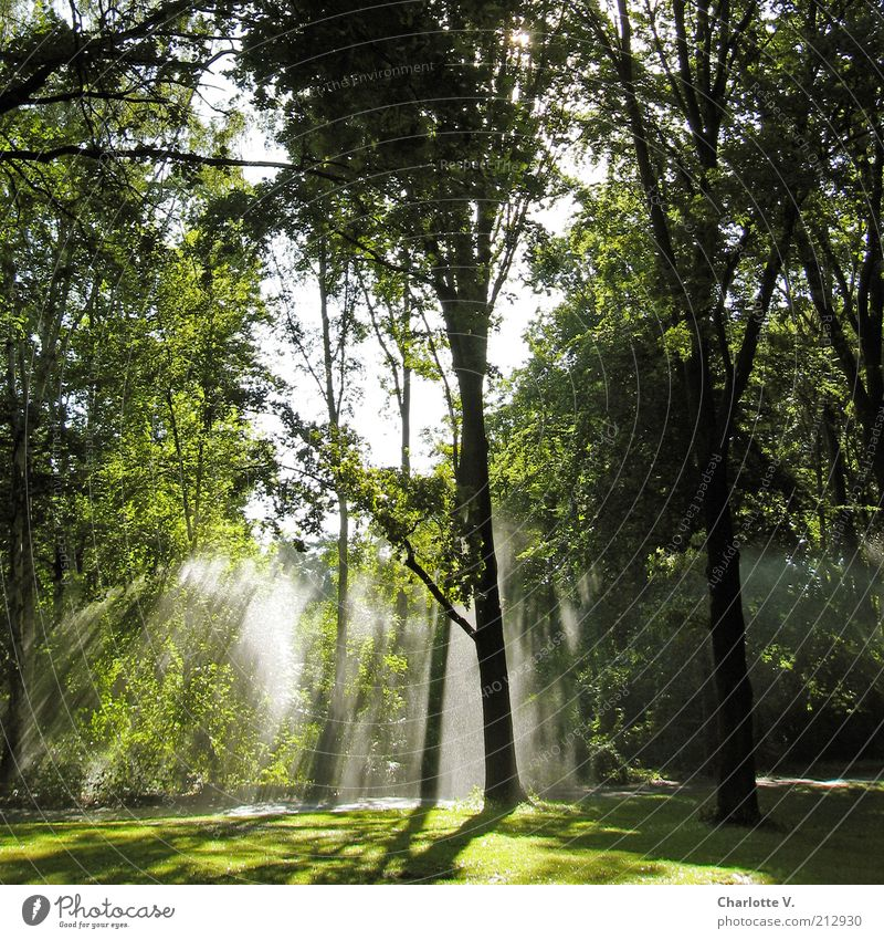 water jets Environment Nature Plant Water Sunlight Summer Beautiful weather Tree Grass Bushes Park Illuminate Green Calm Bright Shaft of light Idyll