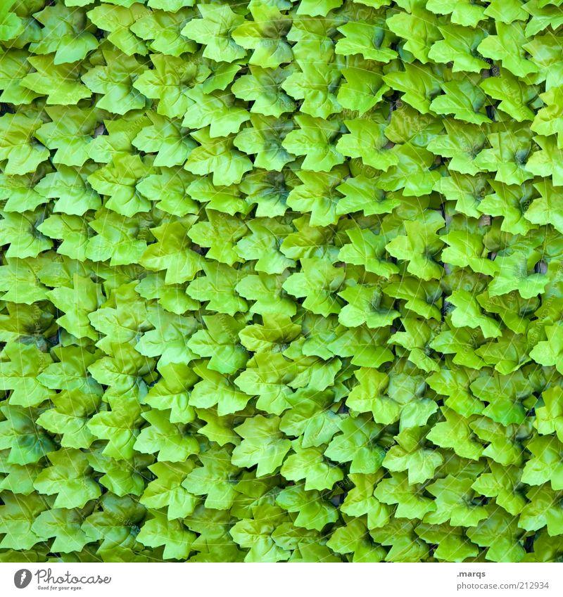 autumns Nature Plant Leaf Foliage plant Exceptional Many Green Colour Arrangement Vine leaf Background picture Colour photo Exterior shot Close-up