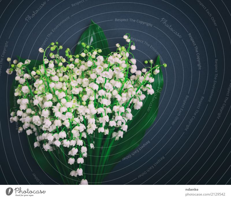 white blossoming lilies of the valley Beautiful Garden Nature Plant Flower Bouquet Bright Small Black White Lily of the valley blooming spring Fragrant stem