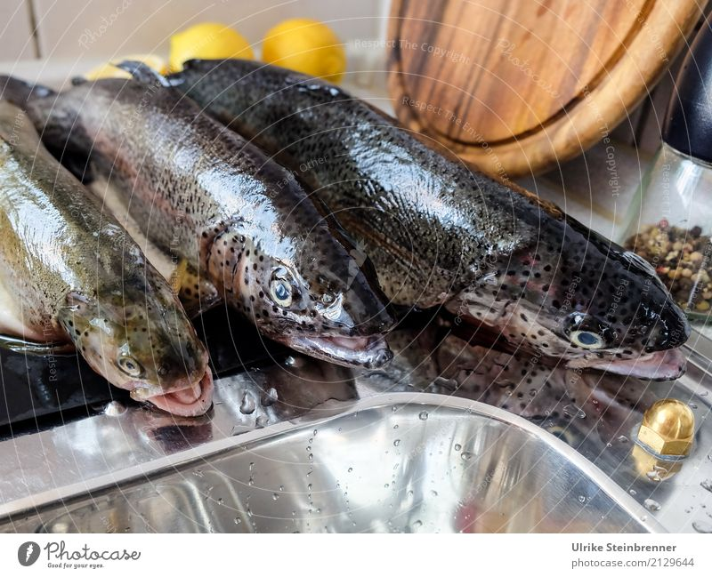 Fresh fish 2 Food Fish Herbs and spices Trout Nutrition Bowl Kitchen Eating Wild animal Dead animal 3 Animal Lie Natural Clean Anticipation To enjoy Quality