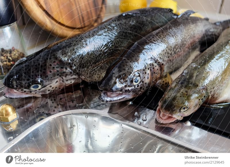 Fresh fish 3 Food Fish Herbs and spices trout Nutrition Bowl Kitchen Eating Wild animal Dead animal Animal Lie Natural Clean Anticipation To enjoy Quality