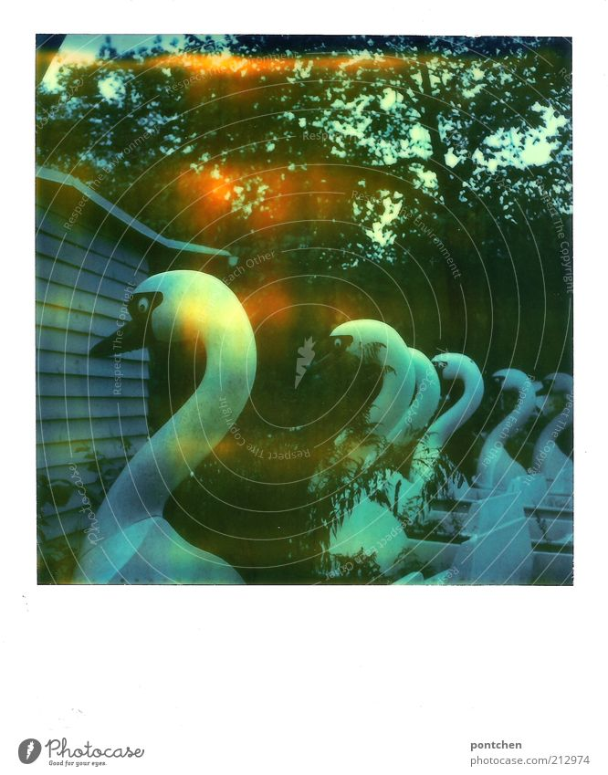 Polaroid shows pedal boats in swan shape. Decayed. Spreepark Theme Park Leisure and hobbies Amusement Park Animal Swan Old Derelict Invalided out Out of service