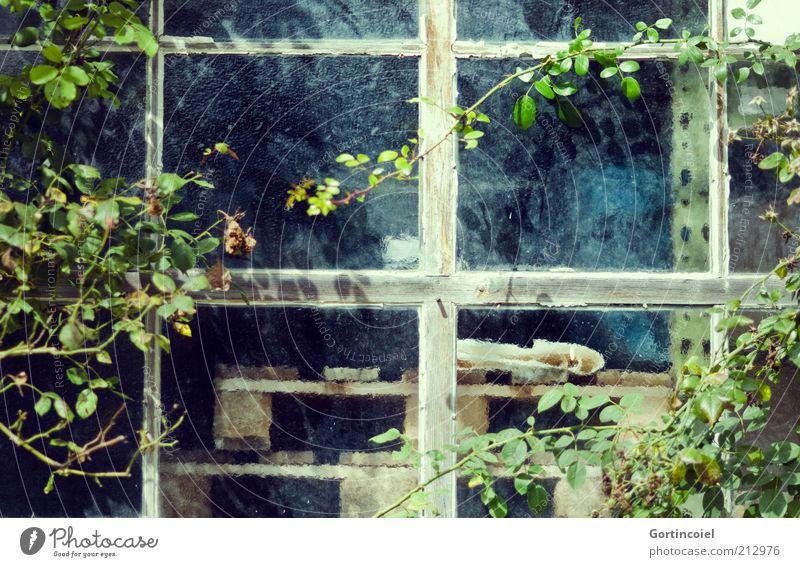 Old Plant Leaf Window Bushes Workshop Window pane Section of image Pane Palett Creeper Window transom and mullion Window frame Lattice window Bush rose Green facade