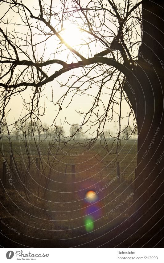 Tree branches in front of field in back light Winter Environment Nature Landscape Sunrise Sunset Autumn Climate Weather Field Deserted Fence post Lens flare