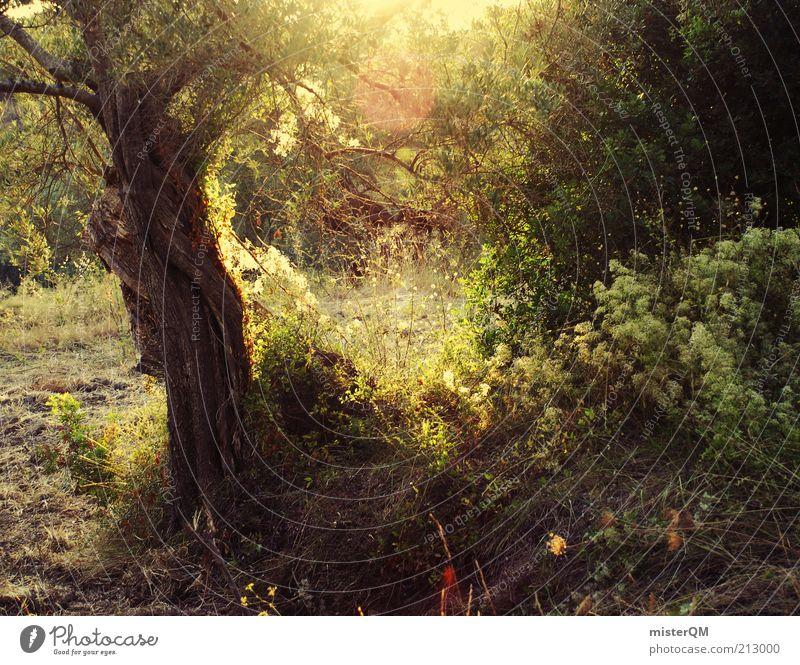 Nature Green Tree Plant Sun Calm Forest Dark Landscape Environment Contentment Esthetic Peace Mysterious Footpath Spain