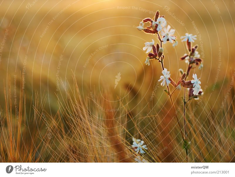 Nature Beautiful Plant Blossom Freedom Warmth Contentment Moody Environment Esthetic Peace Blossoming Flower Macro (Extreme close-up) Ease