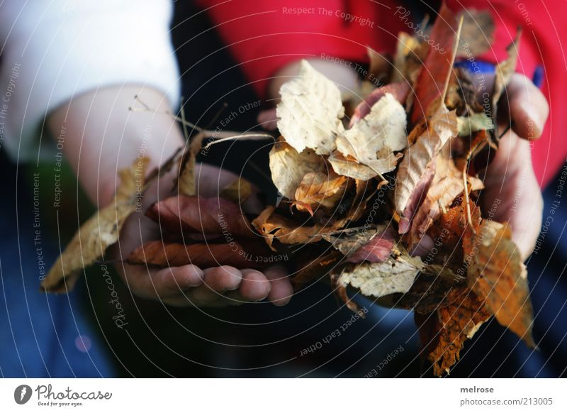 helping hands ... Gardening Arm Hand Environment Nature Autumn Leaf Work and employment Discover Faded Together Natural Blue Brown Red White Friendship