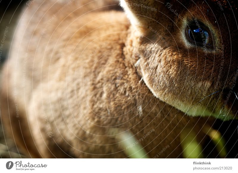 Beautiful Animal Eyes Brown Observe Curiosity Pelt Discover Animal face Pet Zoo Hare & Rabbit & Bunny Partially visible Section of image Cuddly Farm animal