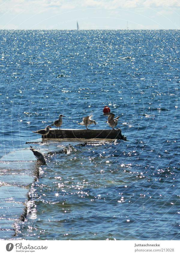 Ocean Blue Summer Animal Far-off places Bird Glittering Environment Horizon Group of animals Wing Swimming & Bathing Infinity Idyll Wild animal Footbridge