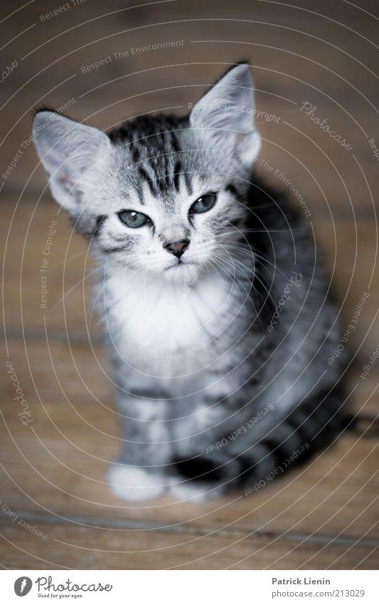 Beautiful Animal Cat Contentment Moody Small Environment Sit Animal face Trust Pelt Pet Deserted