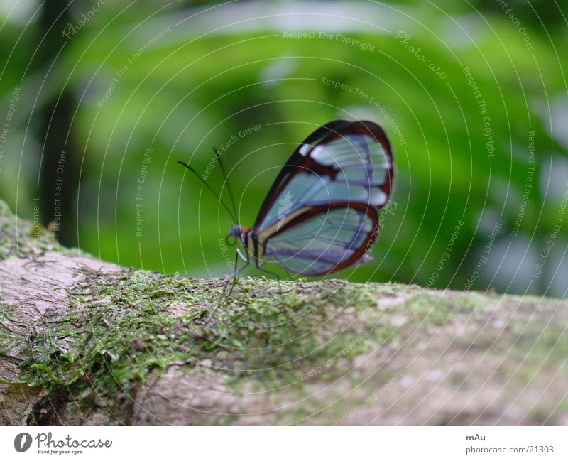 Blue butterfly Butterfly Calm Tree Brittle Blur Transparent Nature Close-up Branch