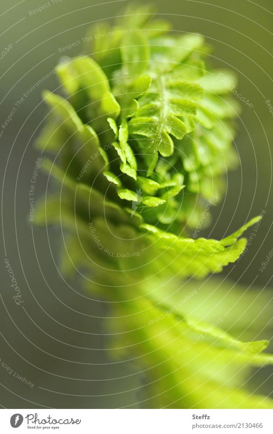 Nature Plant Summer Beautiful Green Forest Fern Foliage plant Wild plant Plantlet Bright green Fern leaf Forest plant