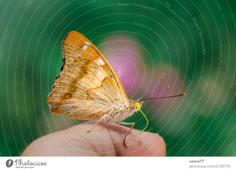 Nature Summer Green Hand Animal Love Happy Brown Orange Pink To enjoy Fingers Trust Butterfly Appetite Brash