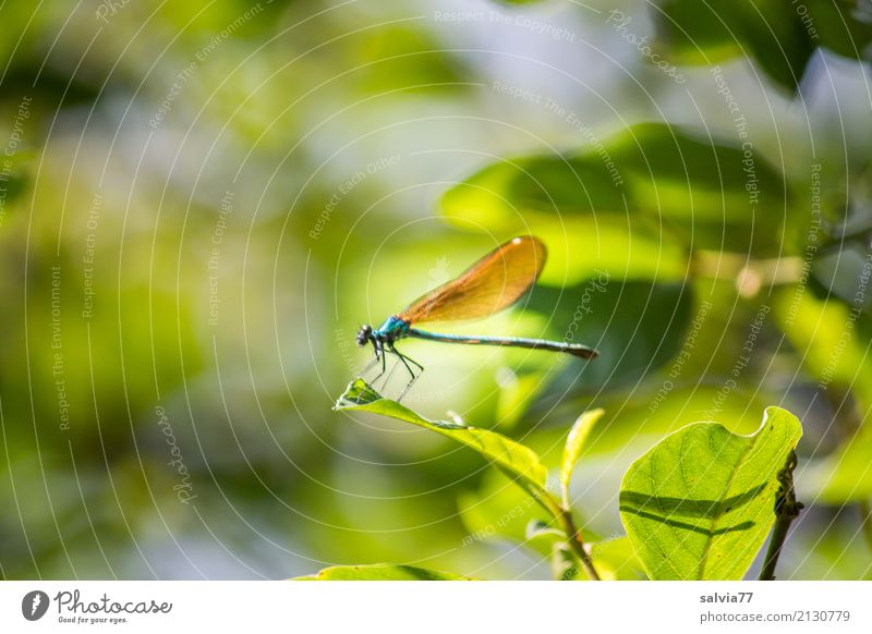 game of hide-and-seek Nature Plant Animal Summer Bushes Leaf Forest Wing Insect Dragonfly Demoiselles 1 Green Ease Break Camouflage Hide Visual spectacle