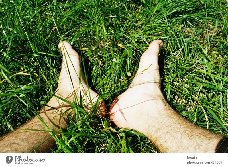Feet in the grass Grass Green Blade of grass Nature Relaxation Skin Sit